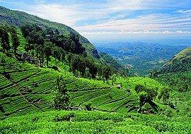 Sri Lanka körutazás